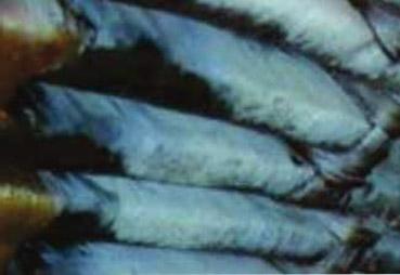 Iris Power Case Study Petrobras - Surface damage